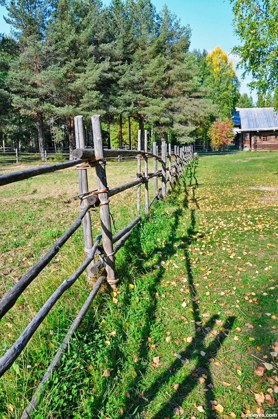 Summer Fence