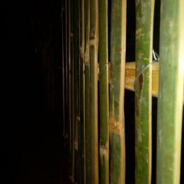 Bamboohedge