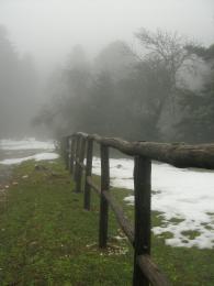 Woodenfenceintheforest