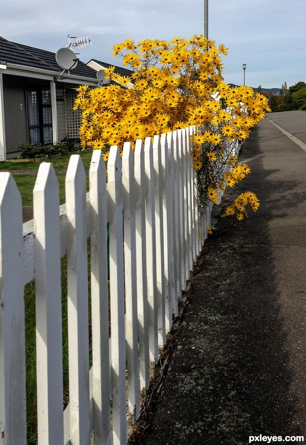 White picket-fence