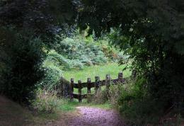 Hiddenintheforest