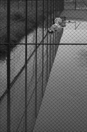 Tenniscourtswimmingpool