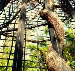Fenceandtree