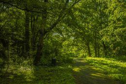 Da Dark Green Woods