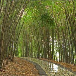 BambooForestPath