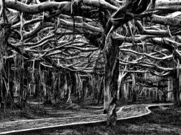 Banyan Forest  Picture