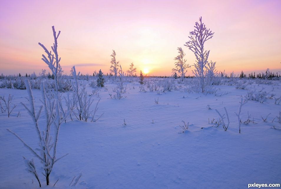 Sunset in the snowfield