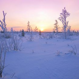 Sunsetinthesnowfield