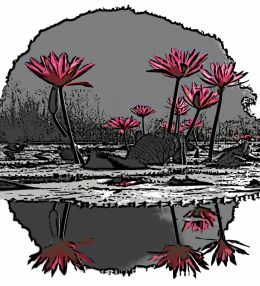 Water Lilies in Filter Forge
