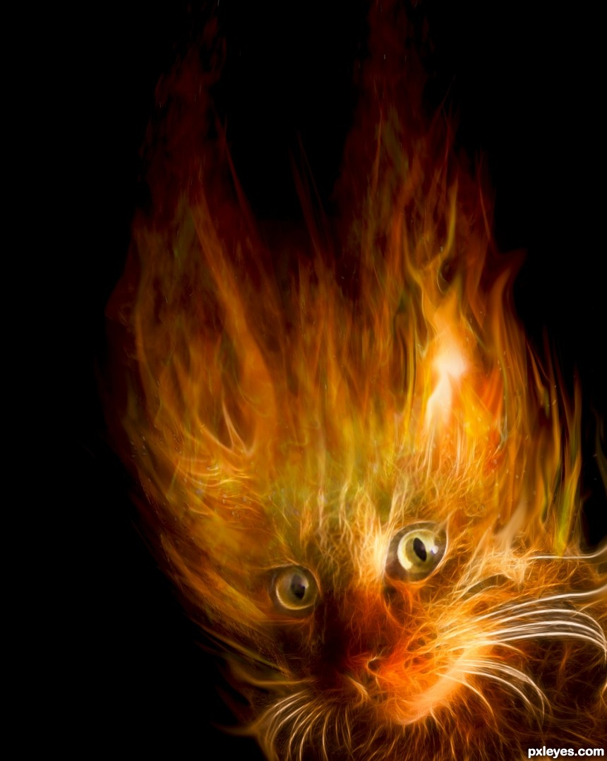 FireCat photoshop picture)