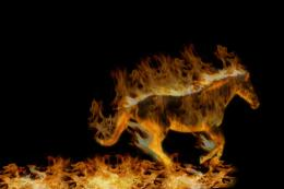 Flaming Horse! Picture