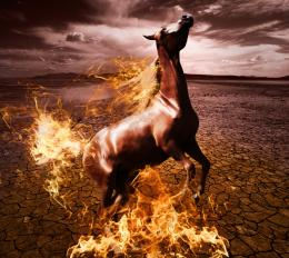 burning horse Picture