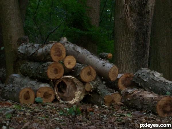 some nice logs