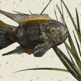 gyotakutheartofJapanesefishprintwithwatercolor