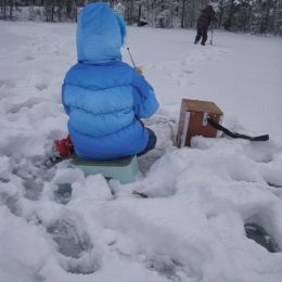 Dad, the fish can be frozen? Picture