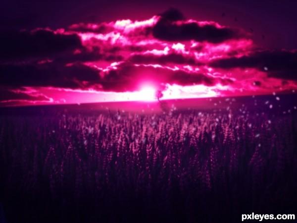 Pink sights