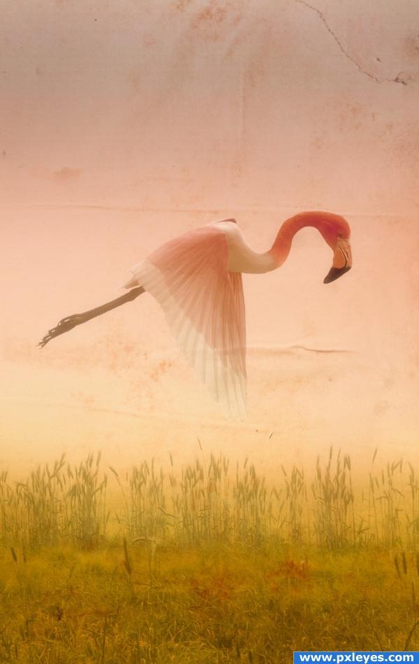 Mystical Bird
