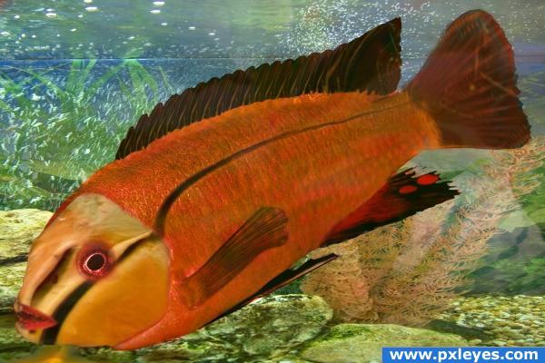 A new fish