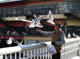 Feedingseagulls