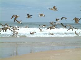 Birdsenjoyingthewind