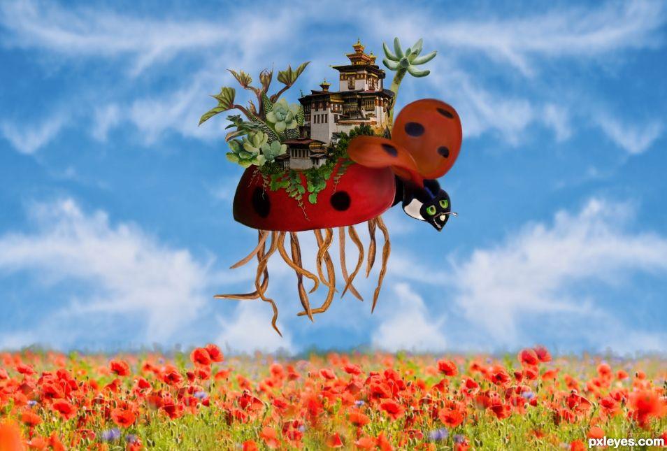 Ladybird island