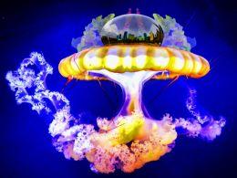 Dark City on Bright Jellyfish
