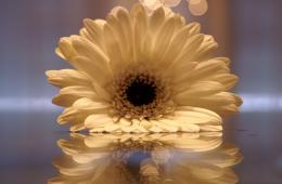 Thepowerofoneflower