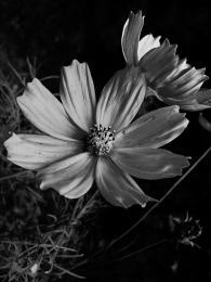 petals Picture