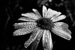 rainymorning