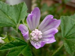 firstspringflowers