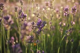 purpleglitter