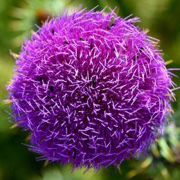 strangeflower