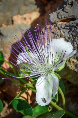 Unknown flora...