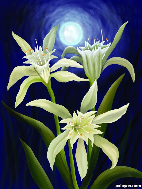 Creation of Lillies in the night: Final Result