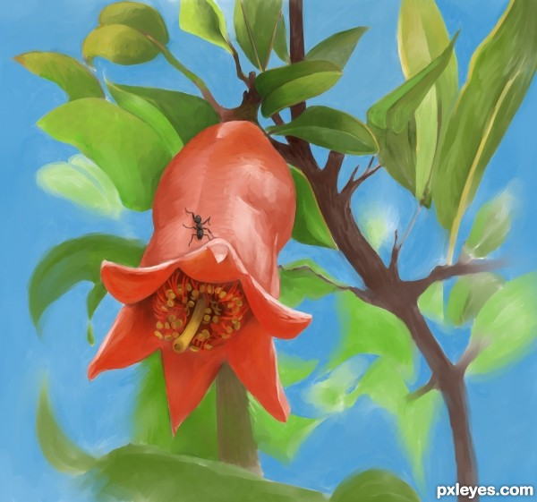 Creation of pomegranates flower: Final Result