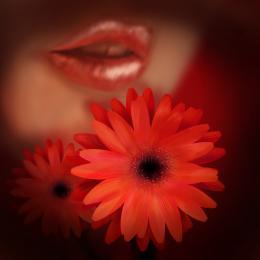 FlowerampLips