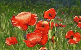 ThicketwithPoppies