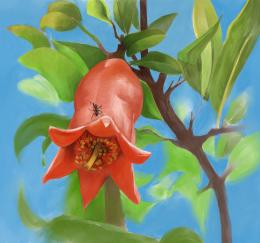 pomegranates flower