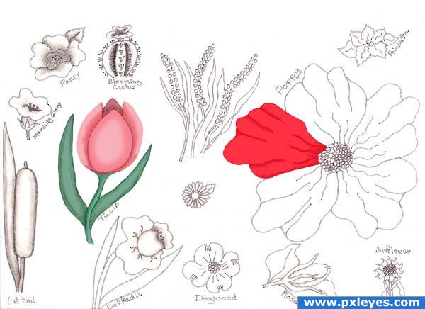 Creation of Flower Drawing Lessons: Final Result