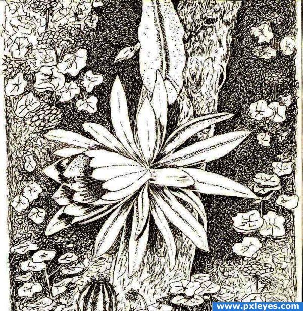 """Blooming """"Epiphyllum"""""""