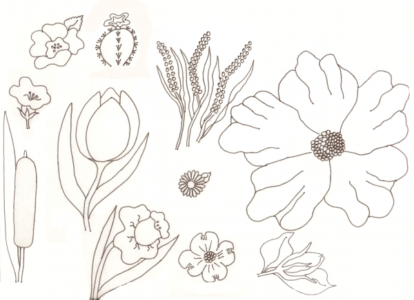 Drawing guide the making of flower drawing lessons for Poppy drawing step by step