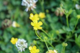 Floweryfields