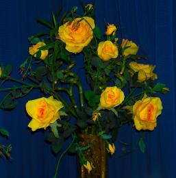 Floweryflowers