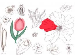FlowerDrawingLessons