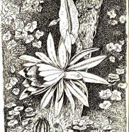 BloomingquotEpiphyllumquot