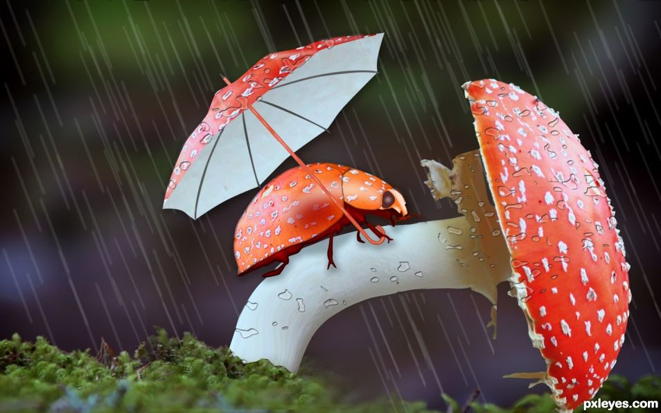Lady Bug in Rainy season