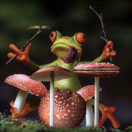 FroggyRichShroomDrummer