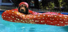 Pup Float