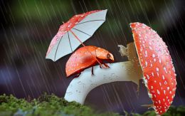 Lady Bug in Rainy season