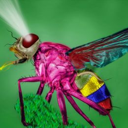 Colorfulfly
